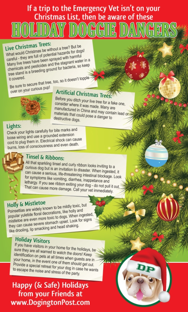 Holiday Dangers from DogingtonPost.com