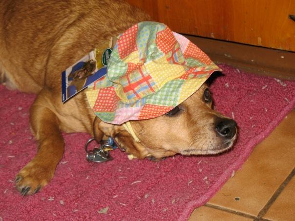 Chazz Wears His Sunday Work in Da Garden Floppy Hat